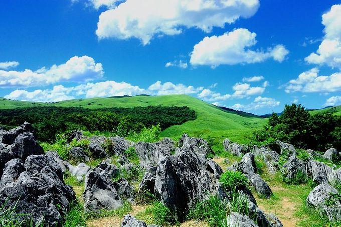 日本最大級のカルスト台地!「秋吉台」は大自然の芸術作品