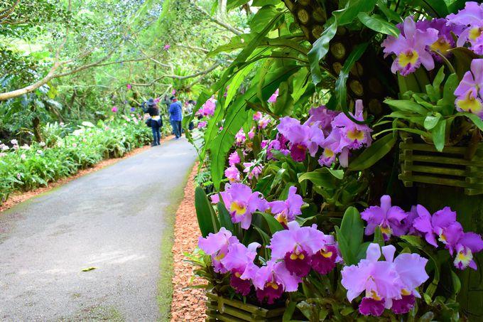 亜熱帯の自然いっぱいの「ビオスの丘」園内