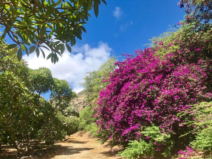 常夏の花、空と木々、大地のコントラスト