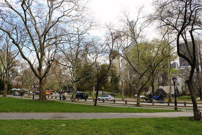 大都会の中のオアシス、セントラルパーク