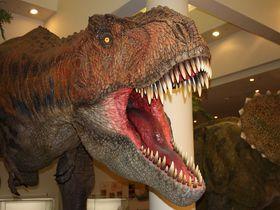 愛媛が誇る科学技術の粋を集めた博物館。大人も子どもも楽しめる『愛媛県総合科学博物館』とはこんな所だ!