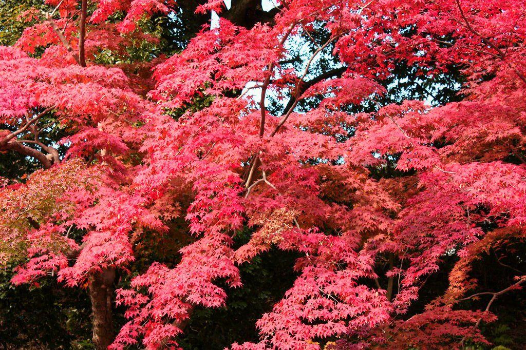 境内の処々に見る紅葉は旅人の心を癒します…