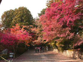 見上げ、見下ろし、振り向いて…。三度の感動を味わえる京都・西山「光明寺」の期間限定・紅葉入山。