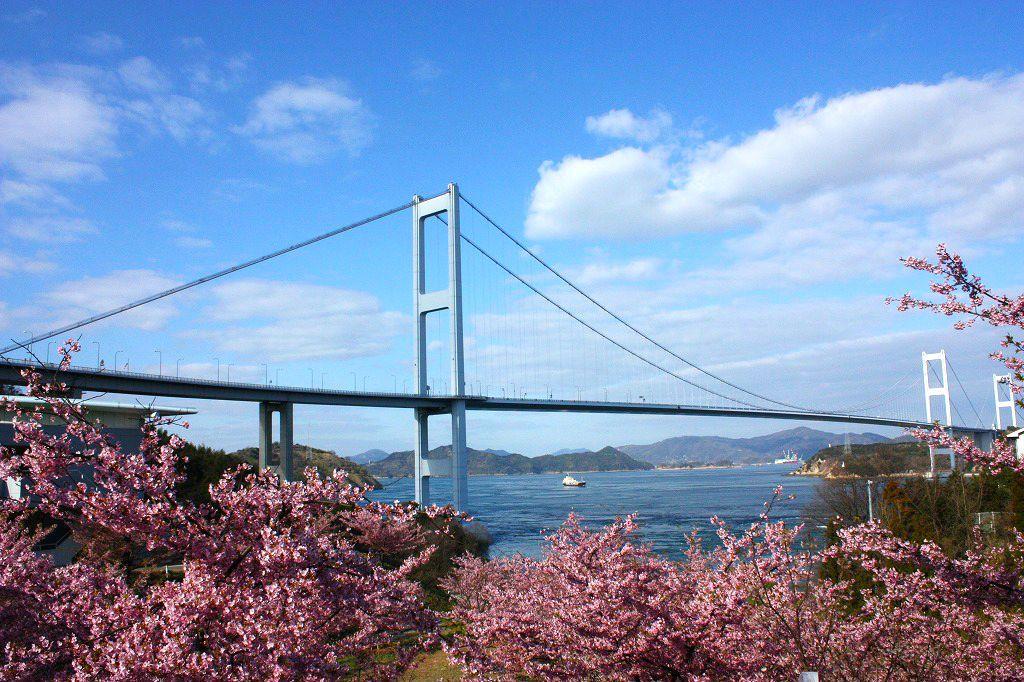 河津桜と来島海峡大橋。