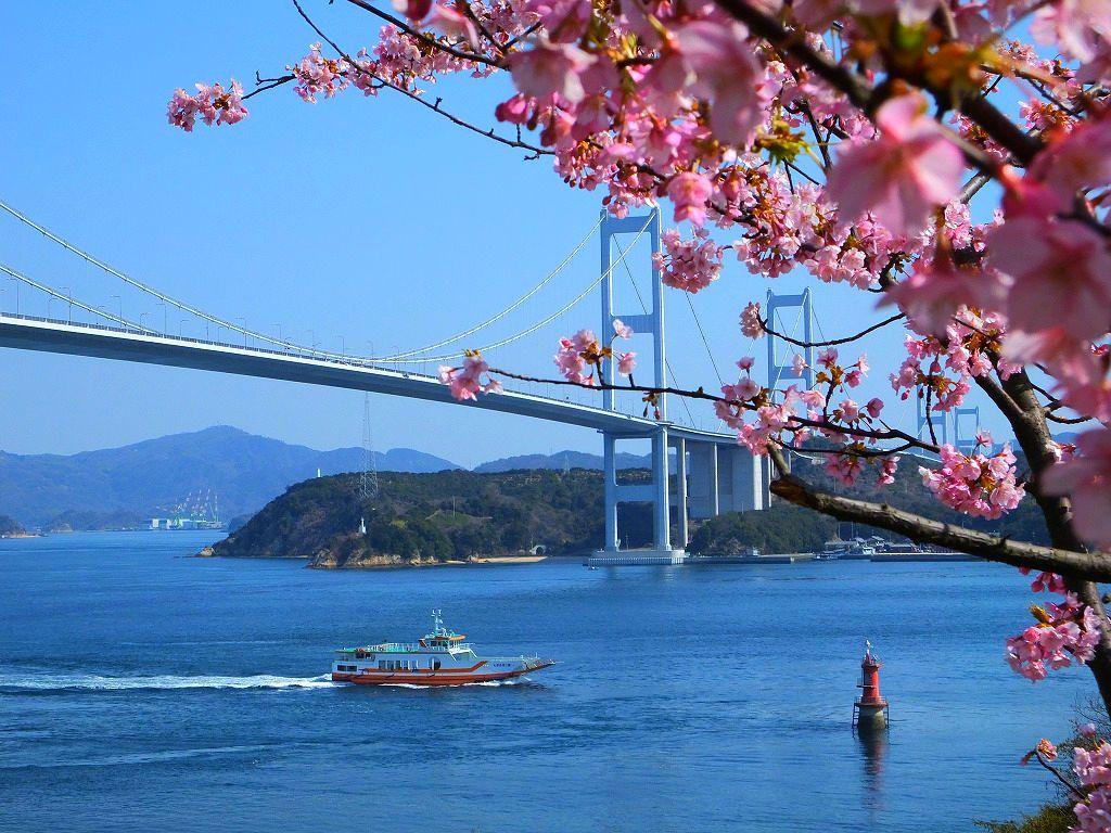 春色のビューポイントで花めぐり観光「しまなみ海道」(愛媛県)