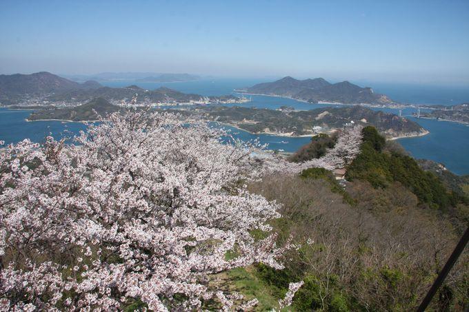三千本の桜@岩城島・積善山