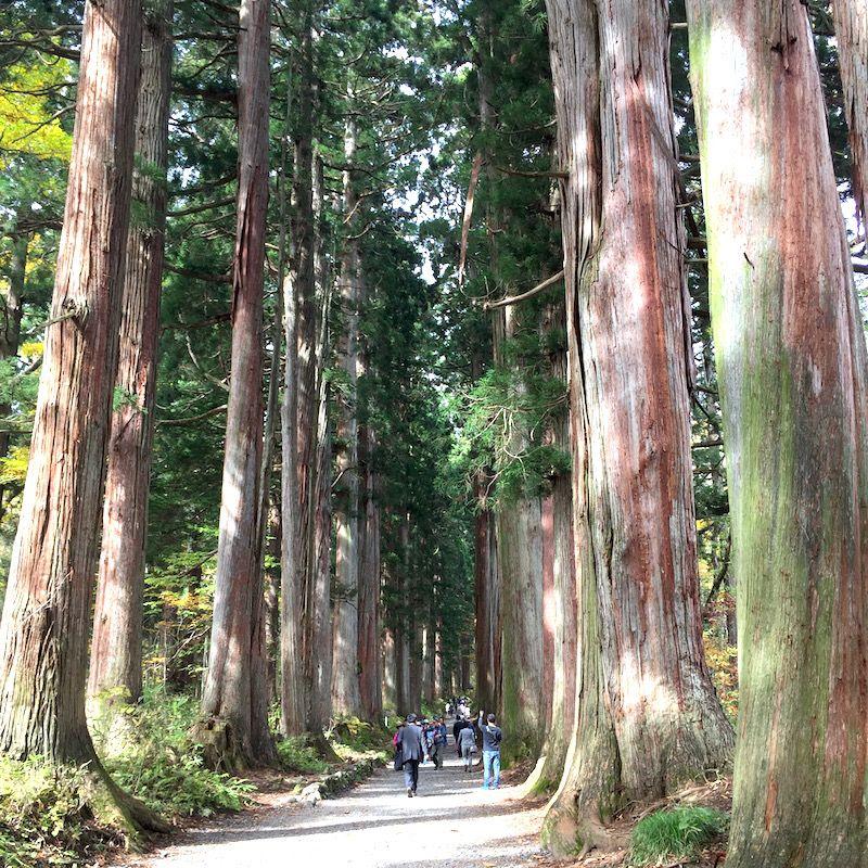 【北信】戸隠神社奥社・九頭龍社は夏と秋にぴったりの観光スポット