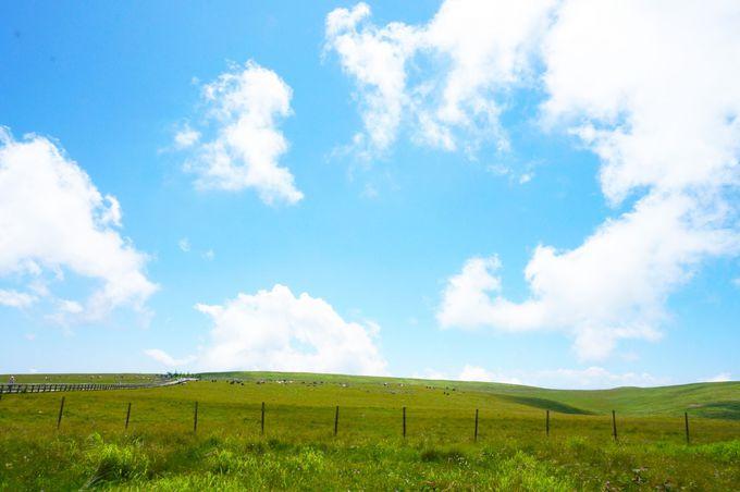 【中信】美ヶ原はハイキングもツーリングもドライブも楽しい!