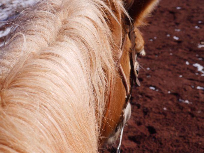 馬の背に揺られて