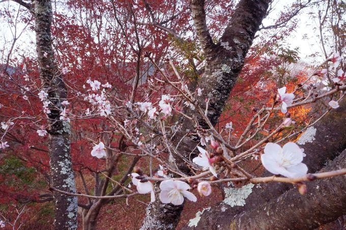 3.桜山公園/群馬県
