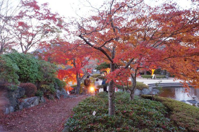 紅葉と同時に桜咲く!
