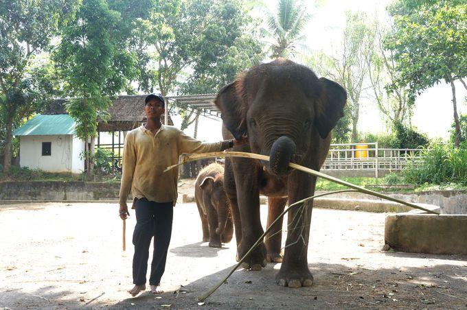 象にも乗れちゃう、欲張りコース!