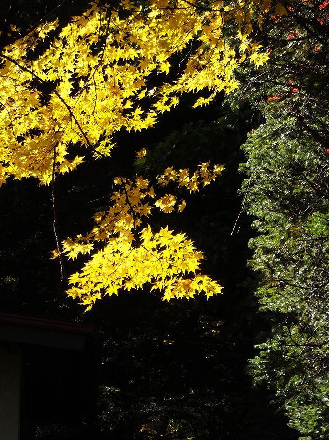 美しく輝く紅葉を思い思いに写真に収めよう!