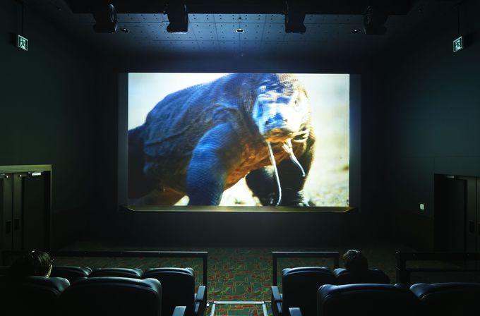 コモド島で世界最大のトカゲに追われ 暗闇の中恐怖でのけぞるかも