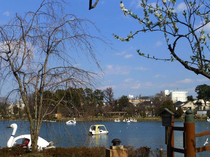 スワンボートで池一周、旅気分