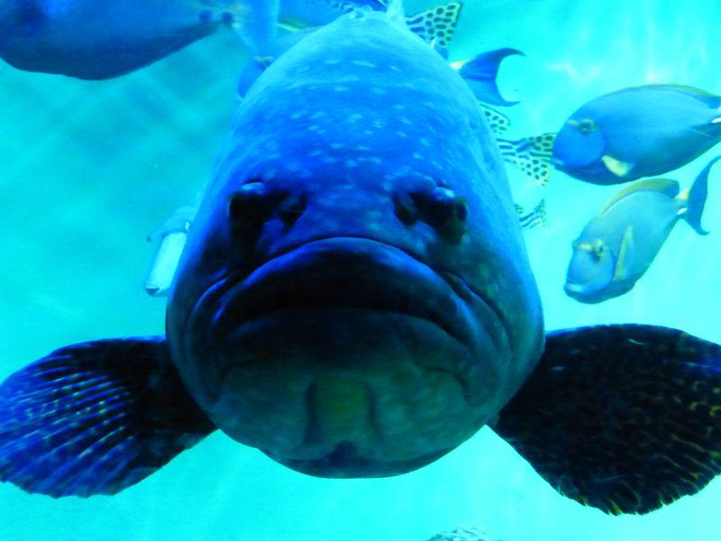 国内最大級のペンギン展示場も!葛西臨海水族園が面白い