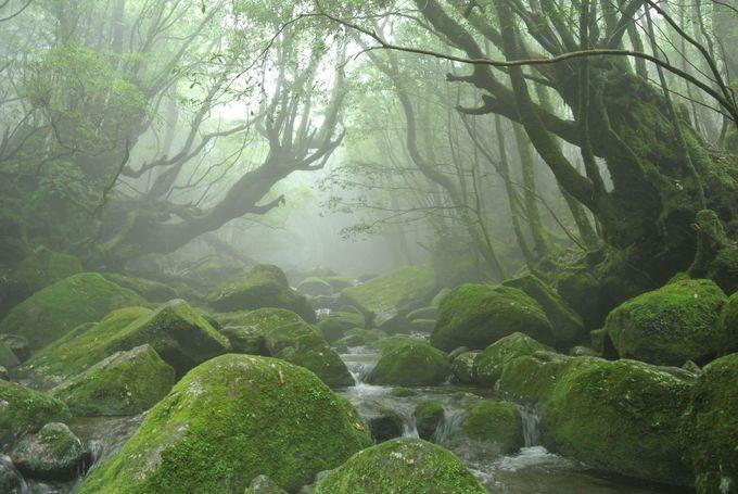 2.もののけの住む場所「白谷雲水峡」