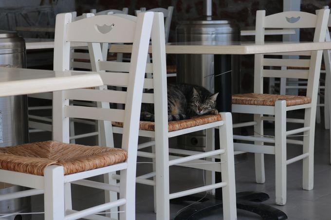 サントリーニ島にはのんびり過ごす動物たちがいっぱい