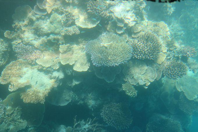 絶対に行くべき!世界最大のサンゴ礁グレートバリアリーフ