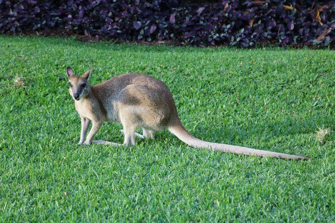 オーストラリアならではの動物と戯れる!