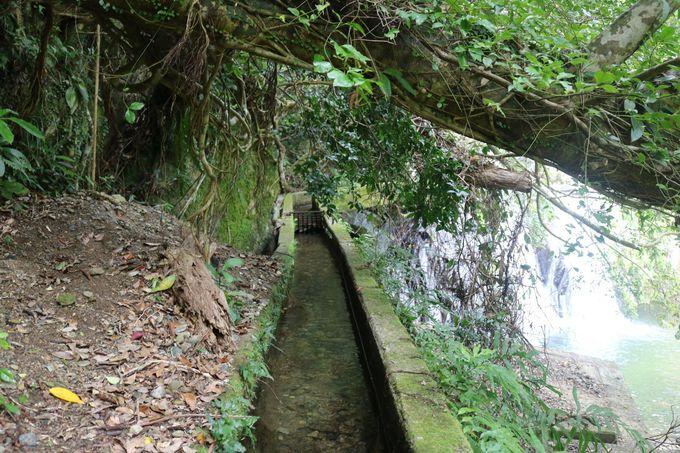 知る人ぞ知る!アランガチの滝&アランガチのガジュマル
