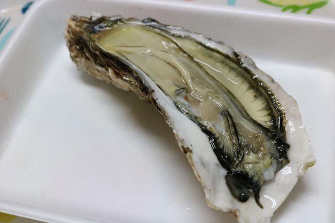 北海道と言えばやっぱり海鮮!グルメを楽しめる時期は?