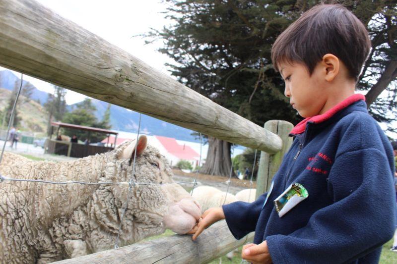おすすめの理由その2:羊やペンギンなど動物がいっぱい!