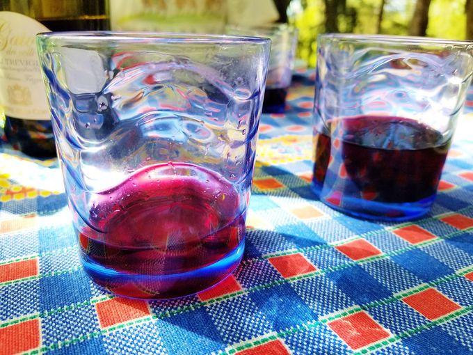 滞在時期でトスカーナ産ブドウ・オリーブの収穫体験も可能!
