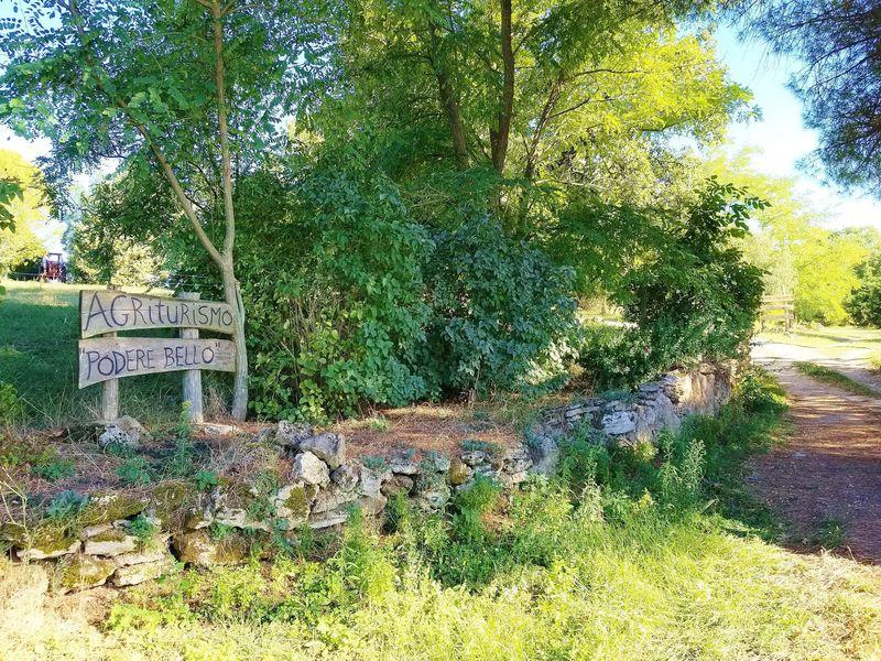 伊トスカーナの老舗アグリツーリズモ「ポデーレ・ベッロ」緑溢れる収穫体験