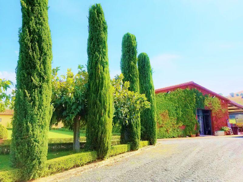 驚異的スーパートスカーナ!イタリア・マレンマのワイナリー「レ・プピッレ」