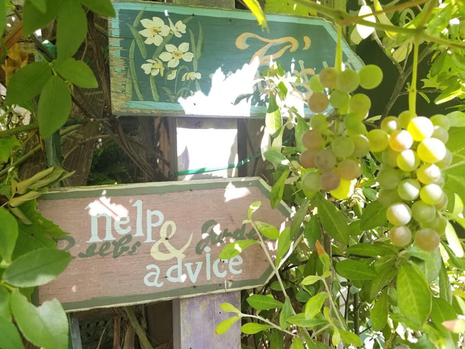 早朝6時半オープン!隅田川沿い親子で始めた緑豊かなカフェ