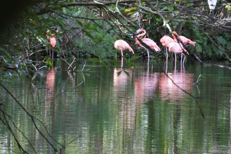 野鳥が放し飼い!?地味にすごいネオパークオキナワの魅力とは?
