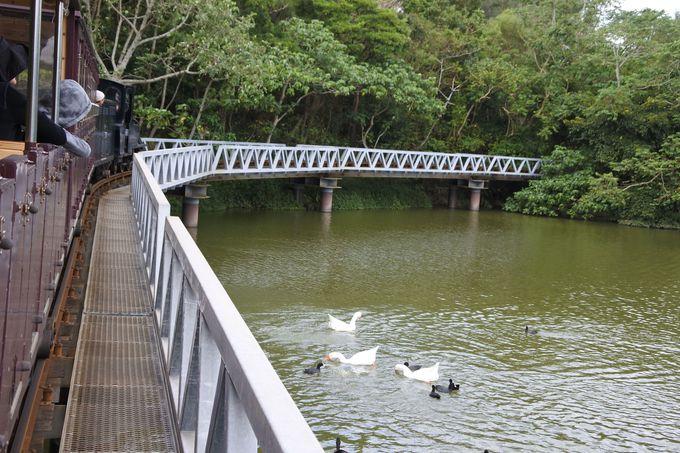 沖縄軽便鉄道が園内の見どころをご案内!