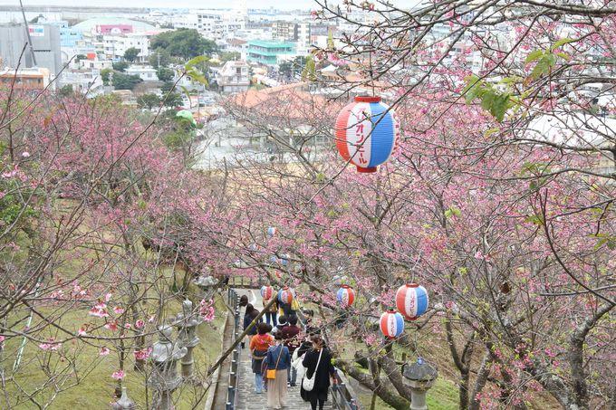 8.名護城公園(なんぐすくこうえん/名護中央公園)