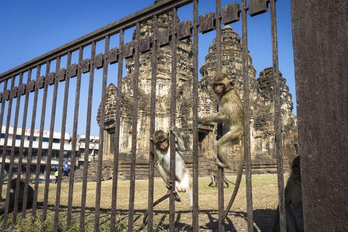 猿がいっぱい!街のシンボル的遺跡プラン・サムヨート