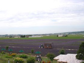 富良野「ファーム富田」の国内最大規模のラベンダー畑でラベンダー栽培の原点を感じよう!