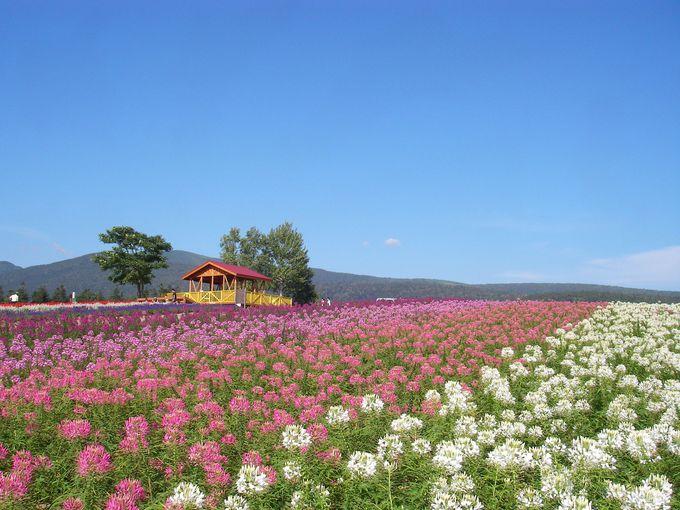 展望台を彩る花畑