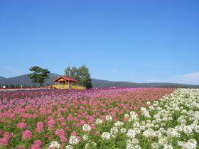 富良野の奥の秘密の花園「麓郷展望台」