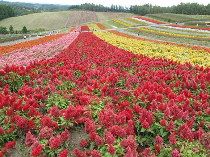 まだまだ花が楽しめる「四季彩の丘」