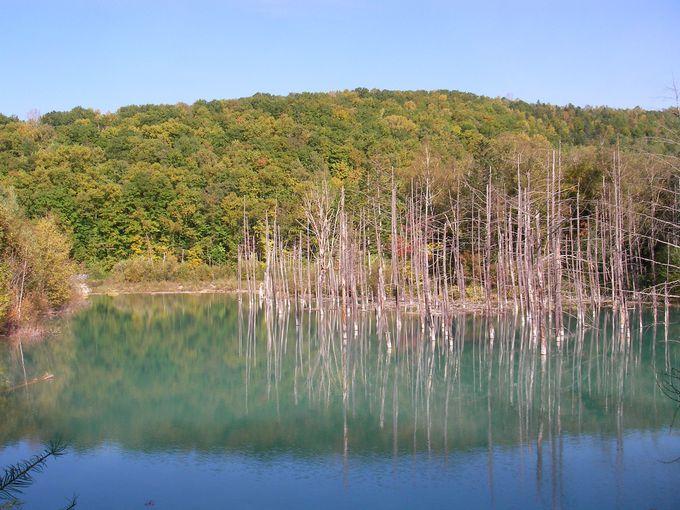 本当に青い「青い池」