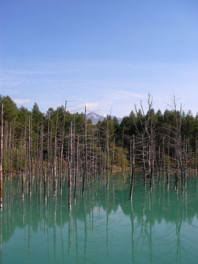 「青い池」の奥に見える山の頂