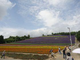 カラフルなお花畑を空中散歩!中富良野町営ラベンダー園