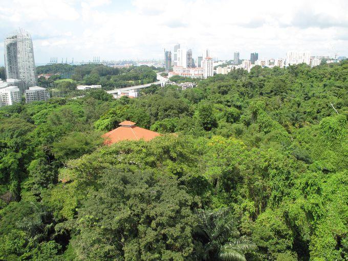 熱帯雨林の面影