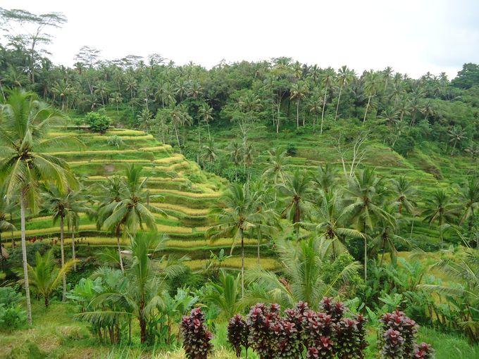 バリ島の観光スポット