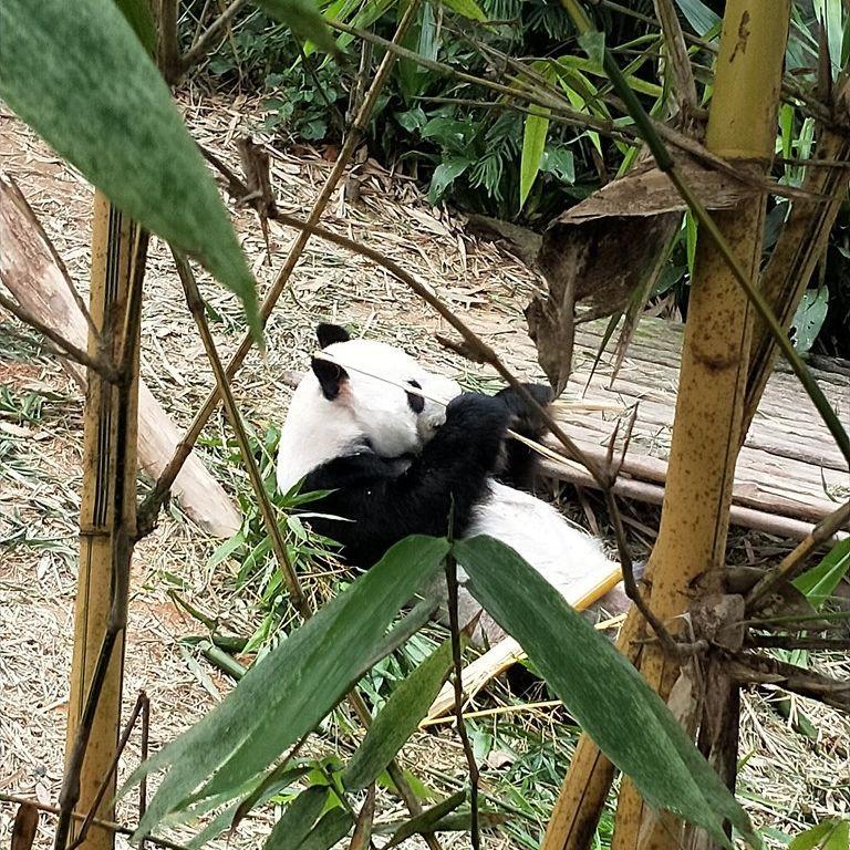 3日目:王道の動物園または植物園とナイトサファリ!