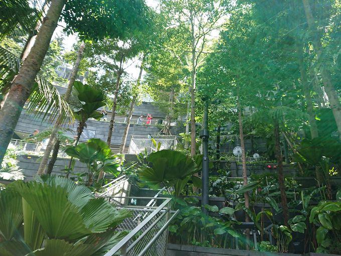 屋内庭園「フォレスト・バレー」