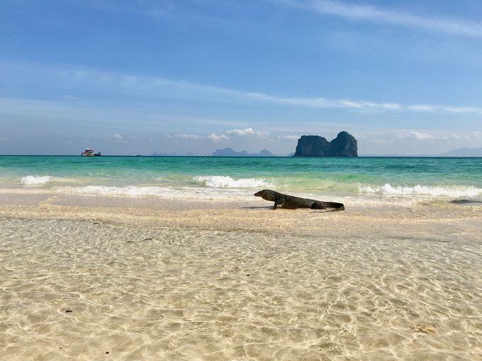 透明度バツグンのビーチで熱帯魚と遊ぶ!