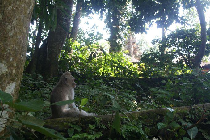 モンキーフォレストで猿を見つけよう
