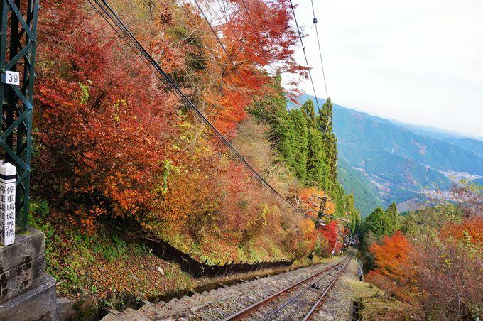 カラフルな情景が広がる紅葉シーズン