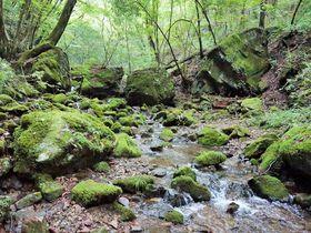 日帰り旅行にオススメ!東京都内に広がる大自然「御岳山」